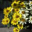 阪神大震災から23年、身体に刻まれている