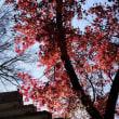 永源寺日差しに映える紅葉
