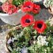 花と緑のまち推進センターの庭で・・・。