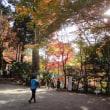 瑞宝寺の紅葉がピーク