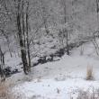 昨日の雪が消えるノンビリ定休日の暖かさ。