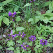 軽井沢の山荘の庭と周辺にて、6月後半の花