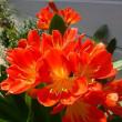 わが家の花