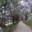 10月11日(木曜日)…権現堂公園WALK