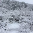 雪⛄️❄️(パート2)