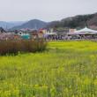 花見山公園と・・・再度、春日神社の大杉と(2018.4.1)