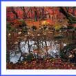 小さな池の秋物語
