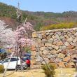 長野・アマンダンスカイの桜もキレイ………!