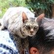 喜多方市 レンガ蔵は猫がいっぱい。