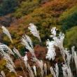 紅葉(八ヶ岳南麓)
