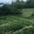 芝草平から屏風岳
