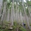 わたし好きだよ ――― 植林の中、平均斜度30度の急登が標高差600m続きました
