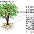 四柱の各柱を樹木で例えれば…。