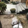11月18日、やっぱり雨でした寒‼️