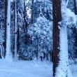 雪の手賀沼