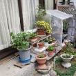 庭の冬仕度