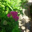 初夏の庭より