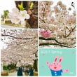 ❀春爛漫❀