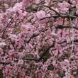春の京都へ~♪