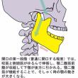 顎を上手に使うために