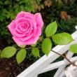 薔薇の鎖~*