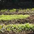 しばらくぶりの秋の青空、台風のあとの庭は? 植物の生命力に脱帽。
