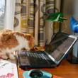 パソコンとネコ