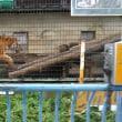 茶臼山動物園に行ってきました。
