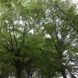 樹々たちが美しい季節・・・いわき