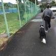 雨降り散歩とモクズガニ☆