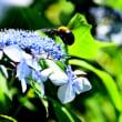 蜜を求めて  花と虫たちのシーンだ‼️ 大阪府 花の文化園にて  No. 1