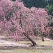 春 桜の季節
