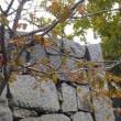 舞鶴城の黄葉