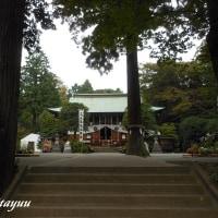 2600年の歴史と格式を宿す古社「比々多神社」