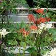 大巧寺のお花たち2