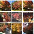 20171124 泉自然公園の紅葉。