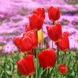 花彩々  暑い陽射し