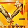 谷中 『鳥のいるカフェ本店』ではフクロがお出迎え!