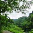 見まわりは椿坂下谷の中央尾根から妙理山へ