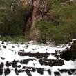 屋久島曇り、縄文杉に行ってきました。