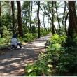 葉山しおさい公園のサツキ、ヤマボウシ