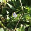 一輪咲いた野の花
