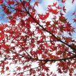 池田牧場 桜と紅葉