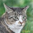 野良猫タイラ