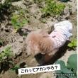 病気のニンニク収穫!頂いたオクラとゴーヤ植え付け(^O^)