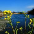 『春の川』 流れけり