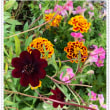 コルチカムと庭の様子