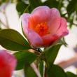 庭に咲く花たち