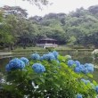 烏ヶ森公園の紫陽花
