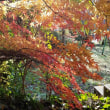 神社の境内の色彩